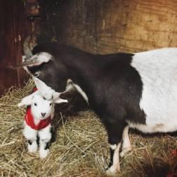 Willow bonding with little Noel