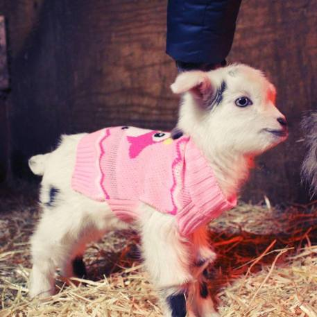 Noel wearing a xs pink dog sweater