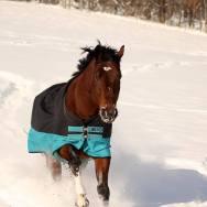 Our paint horse, TJ