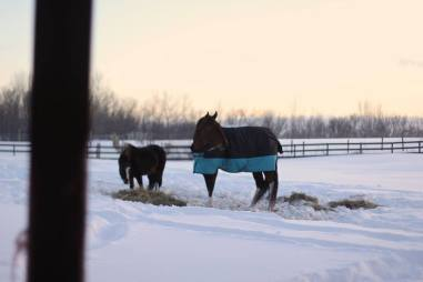 Our two horses, TJ & Justin