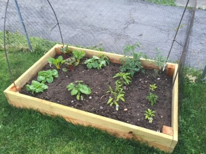 square foot gardening method | grow food in small spaces