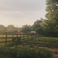 My first large garden, 2018