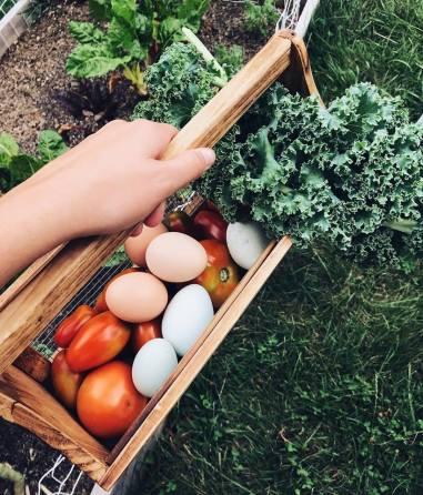 A small garden harvest