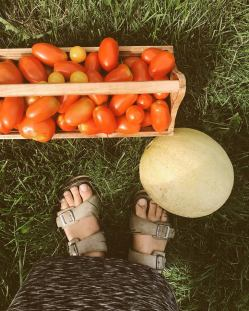 fresh organic tomatoes from the garden