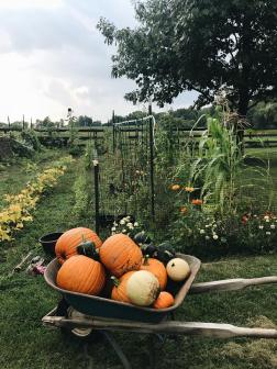 5 tips for starting a garden. pumpkins and winter squash