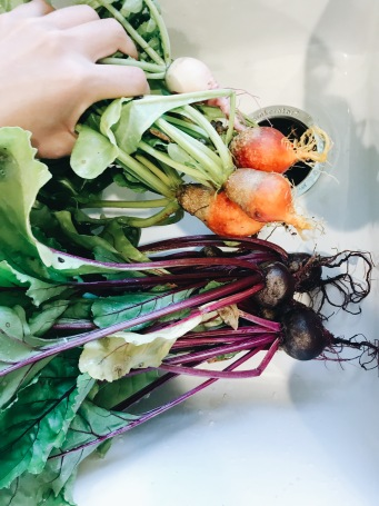Organic beets grown in the spring. 5 tips for starting a garden