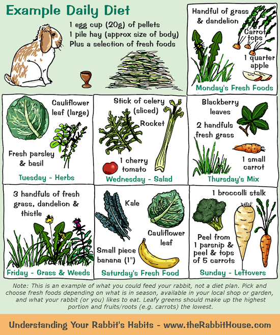 rabbitdailydiet.png