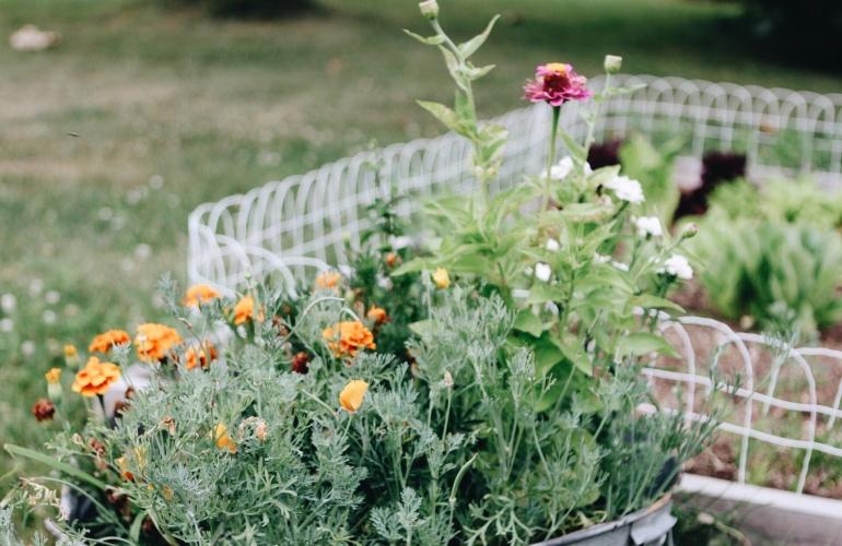 Flowers. 5 tips for starting a garden