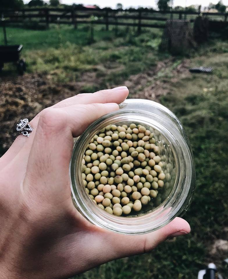 growing plant based protein in the garden