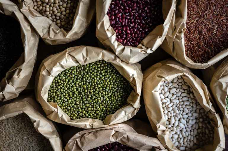 plant based protein you can grow in the garden. growing dry beans