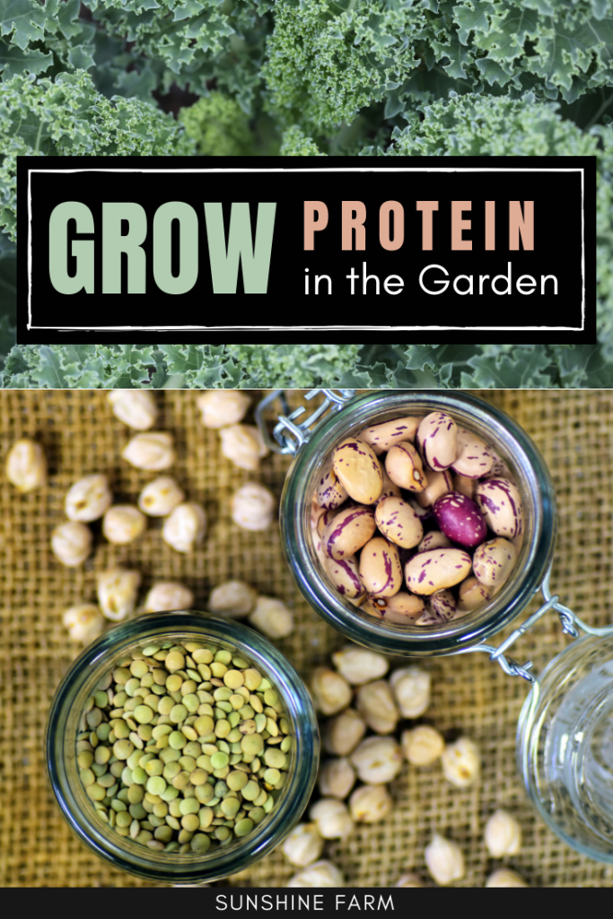 grow plant based protein in the garden