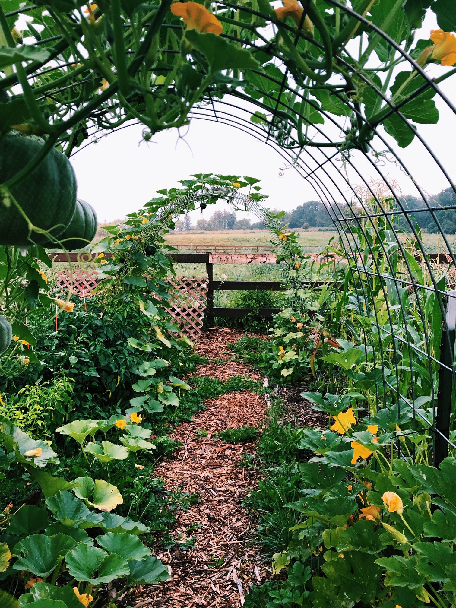 How to Start a Vegetarian or Vegan Homestead | Start a Garden