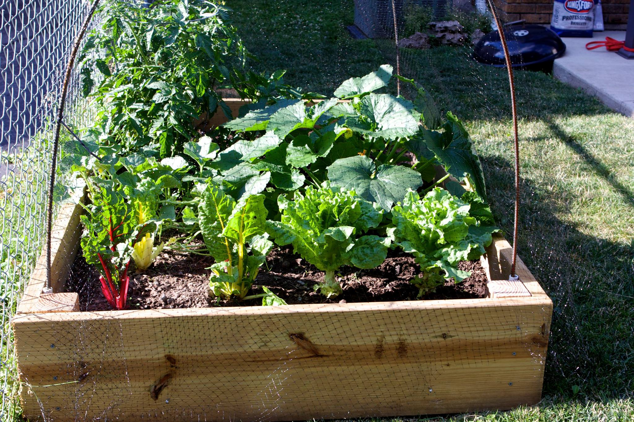 Square foot gardening method in urban or suburban backyards