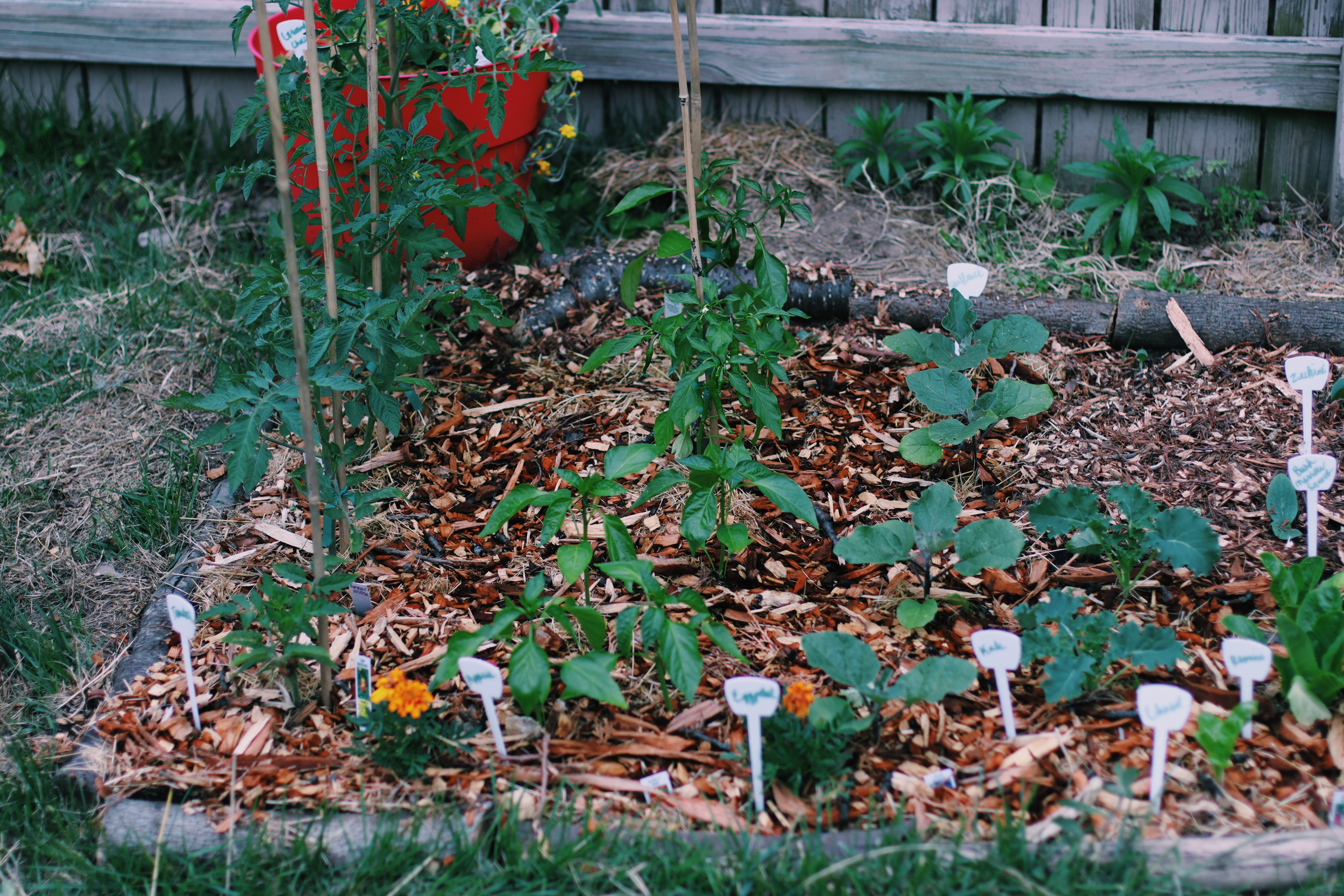 Square Foot Gardening Method in a suburban backyard