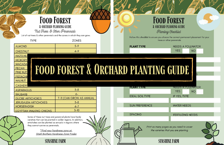 Food forest and orchard planting guide